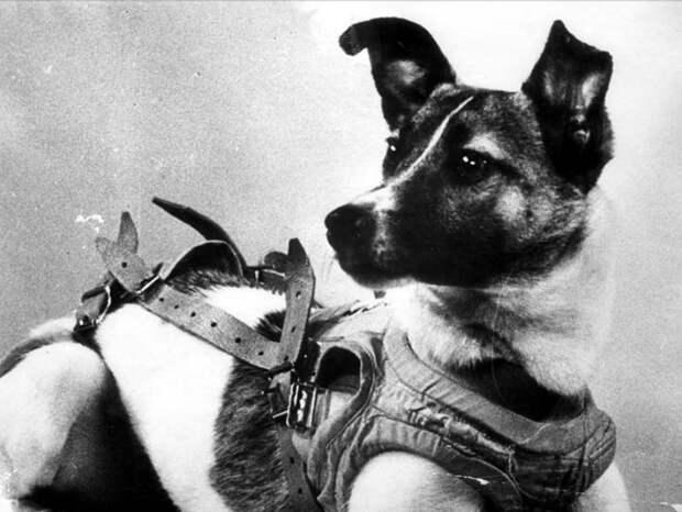 Как погибла собака? «Спутник-2», день в истории, космос, собака Лайка