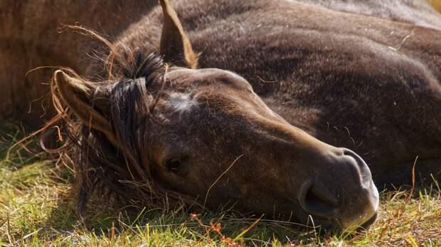 Русская песня «Выйду ночью в поле с конем...» довела иностранцев до слез