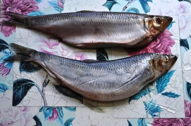 Рыбный день: селедочка маринованная