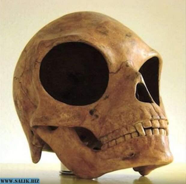 Череп острова Силенд: Ученые не знают, кому он принадлежит