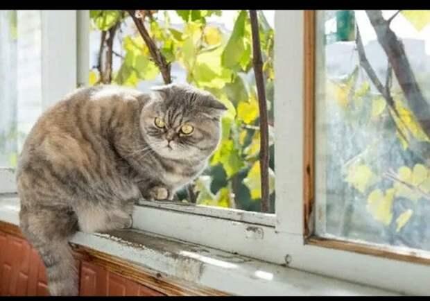 Наша кошка Машка — та еще штучка, своенравная и себе на уме. Она - Юмор -  1348831 - Tabor.ru