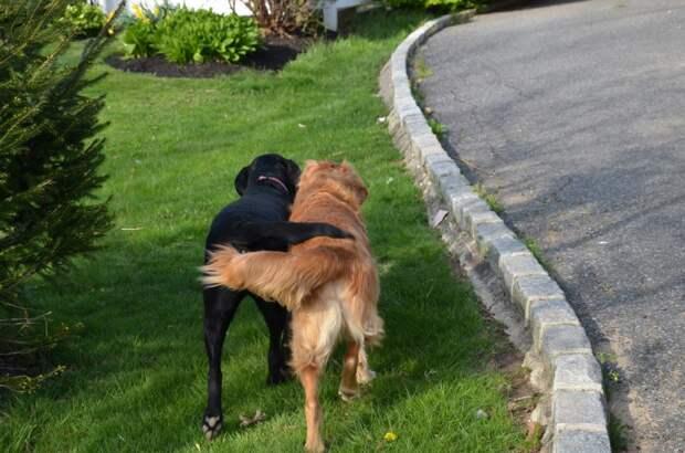 Хотите узнать, как ваша собака заводит друзей? Тогда читайте!