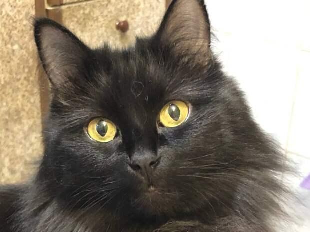 На улице Маршала Тухачевского потерялась черная кошка