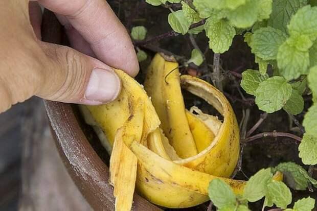 Мошки в рассаде: простой способ избавиться от вредителей