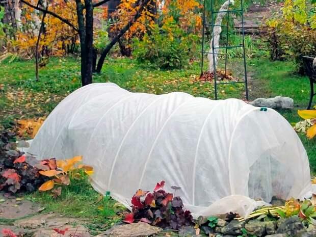Подготовка и удобрение садового участка