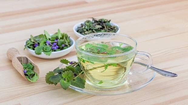 Диетолог назвала основной минус употребления зеленого чая