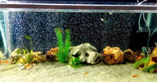 Простой и креативный способ с пользой украсить скучный аквариум