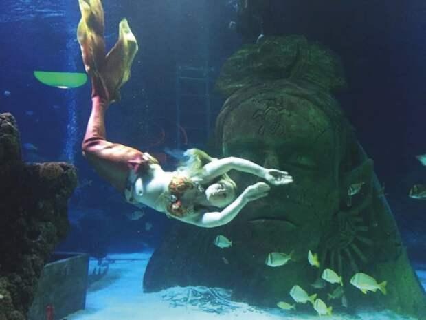 Как рыба вводе: профессиональные русалки вернулись ваквариумы после карантина