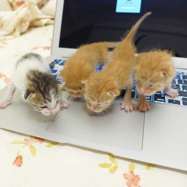 коты в неожиданных местах, Коты, которые всегда рады помочь своему хозяину