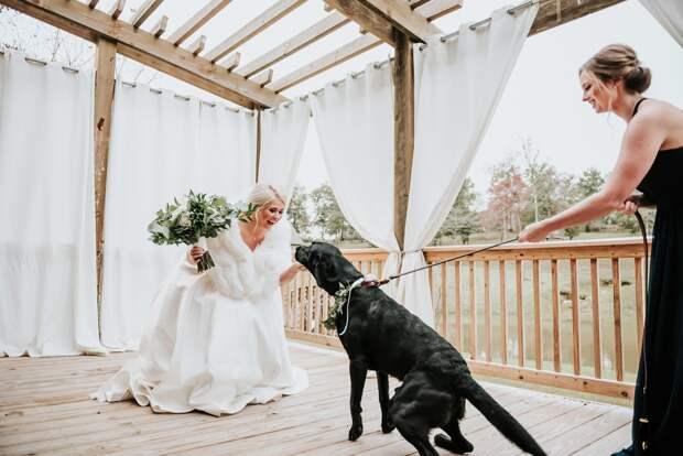 пес на свадьбе
