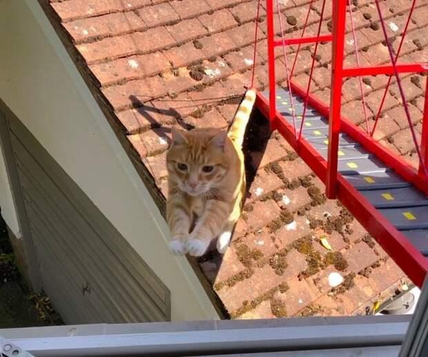 На следующее утро кот осмотрел объект, но предпочёл привычный способ передвижения, проигнорировав старания хозяина в мире, животные, забота, история, кот, люди
