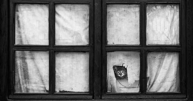 throughwindow04 Нечеловеческое любопытство: что видят в окнах животные