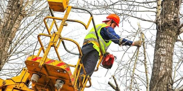 На Кронштадтском деревья спилили из-за близости к ЛЭП