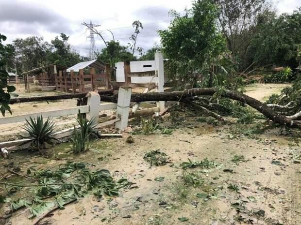 Мужчина укрыл у себя в доме во время урагана 300 бездомных животных