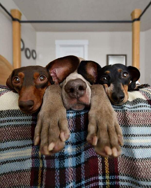 33 до ужаса нефотогеничных животных, которым остается лишь подать в суд на фотографа