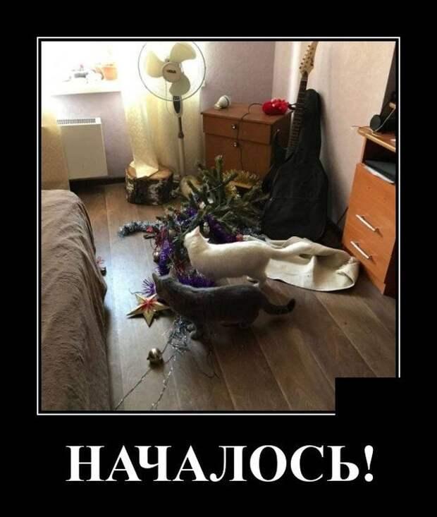 Демотиватор про ёлку и котов