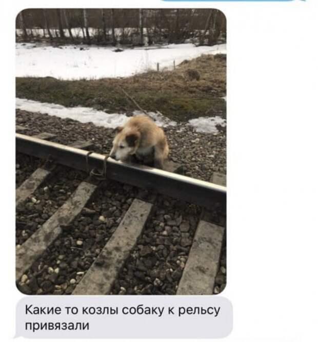 Ради спасения привязанной к рельсам собаки машинист остановил поезд у станции Антропшино происшествия, собака, факты