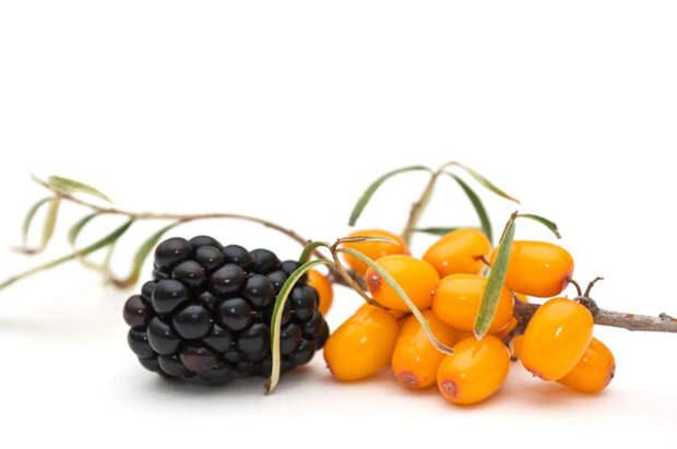 При желании можно добавить к облепиховому соку другой ягодный сок — ежевики, аронии, ирги или черники