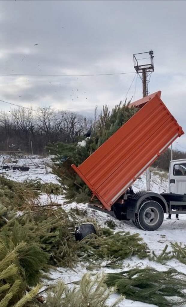 В Севастополе перерабатывают новогодние ёлки