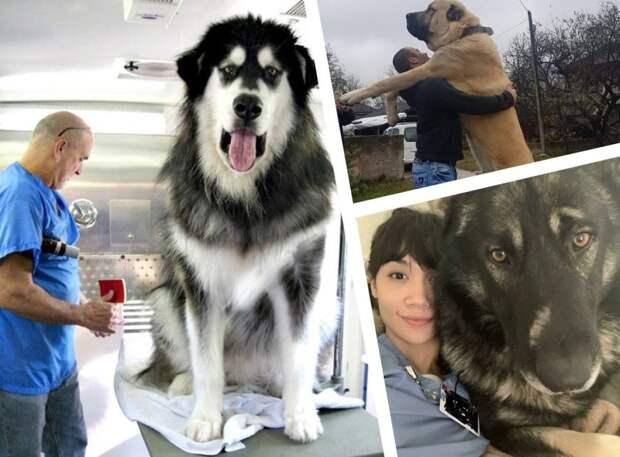 16 огромных собак, которые до сих пор думают, что они маленькие щенки, но это не так