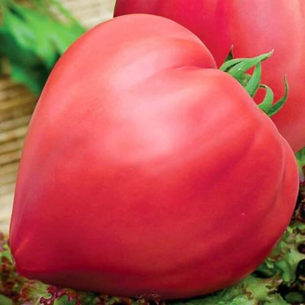 https://rasteks.ru/image/cache/catalog/tomat-byche-serdce-rozovyy-800x800.jpg