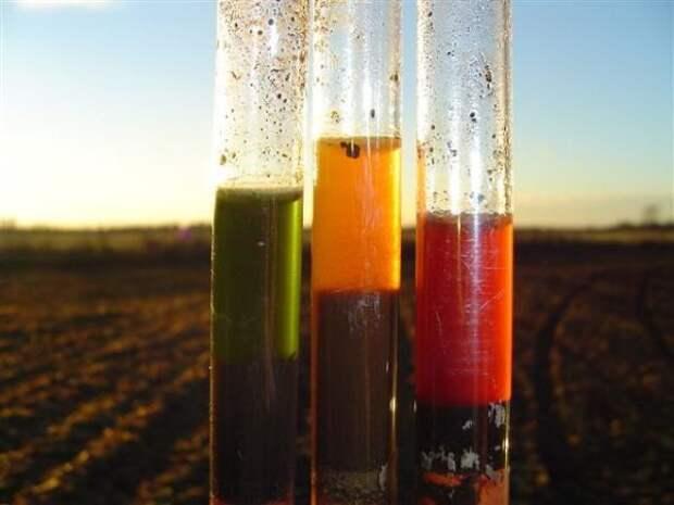 Самый необычный способ определения кислотности почвы
