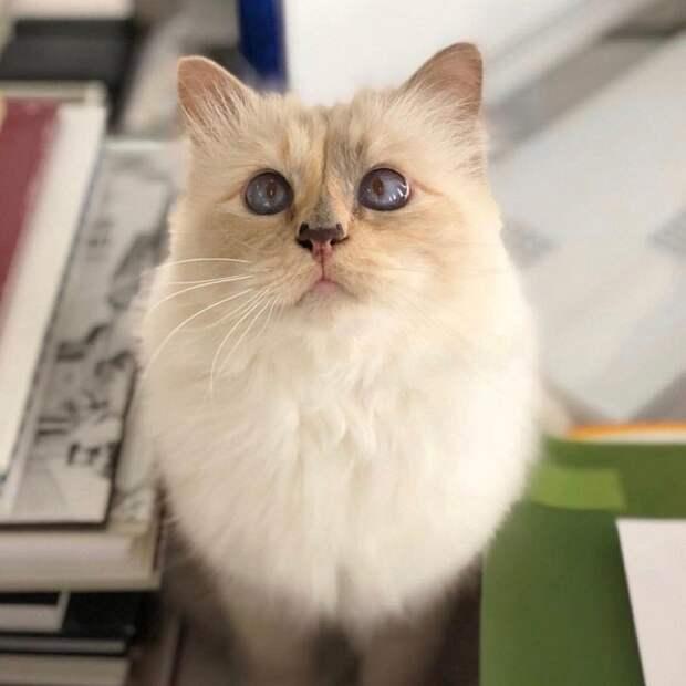 И опять кот: питомец предупредил девочку под Калугой о пожаре в доме
