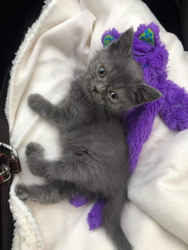 Хрупкий котенок со скрученными лапками был на волоске от усыпления! Но в его судьбу вмешались…