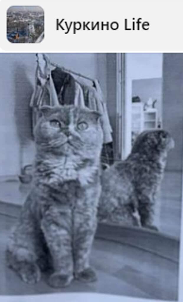На Воротынской потерялась породистая кошка