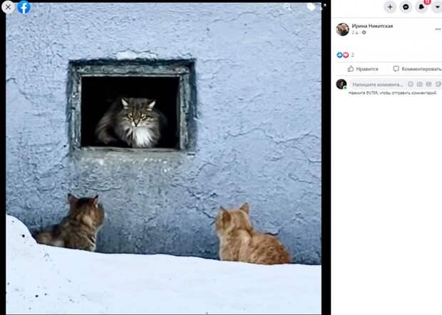 Фото дня: в Лазоревом запустили кошачье телевидение