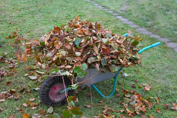 уборка листьев на даче