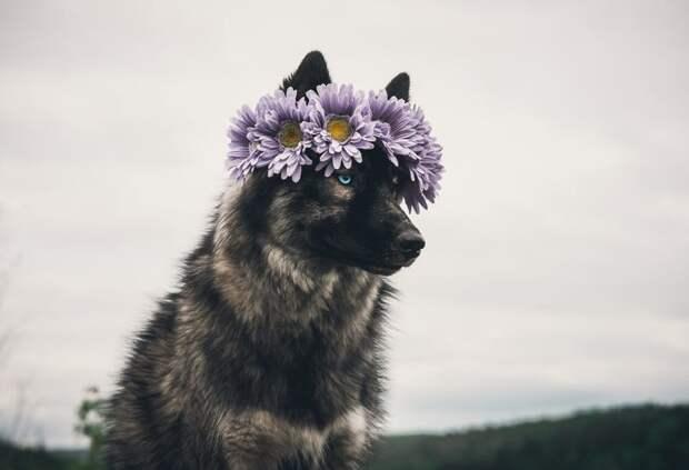 17. Иногда приходится рассчитывать только на себя жизненная позиция, жизнеутверждающие, канада, собаки, философия жизни, фото собак, фотограф, хаски