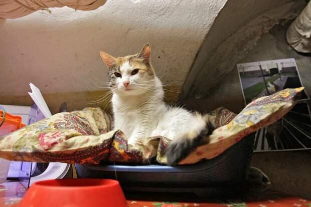 Армия котов Эрмитажа коты, музей, эрмитаж
