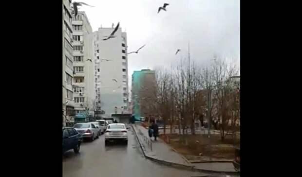 Нашествие чаек удивило жителей Ростова