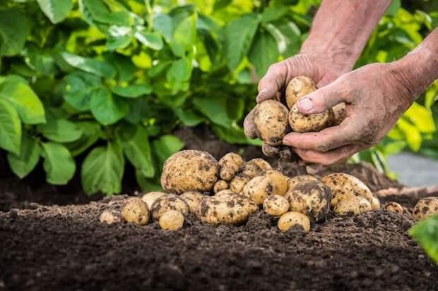 Смеси-выручайки для картошки