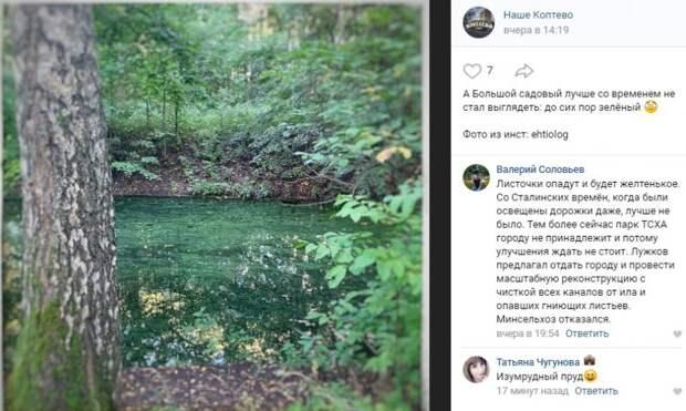 Фото дня: цветение Большого Садового пруда в Тимирязевском парке