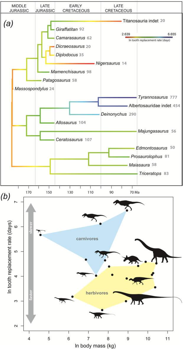 У динозавра с Мадагаскара обнаружили двухмесячный цикл смены зубов