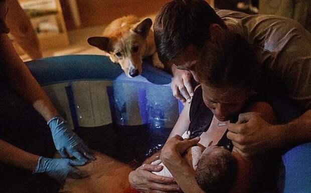 Во время самих родов Брук не осознавала, насколько увлеченно следил за всем процессом Рэйнджер. Только благодаря фотографиям она увидела необыкновенную реакцию своей любимой собаки дети, животные, история, корги, роды, семья, собака