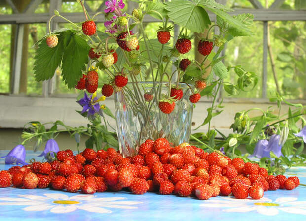 Сбор ягод и другие работы в июльском саду