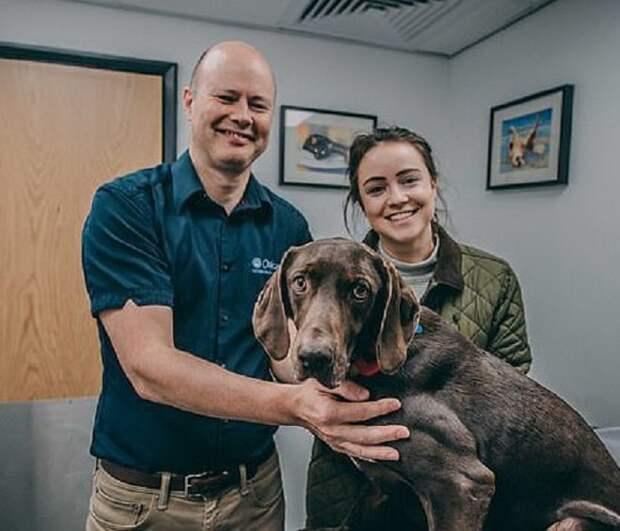 Собака и новые хозяева