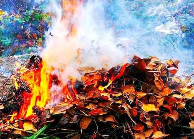 Сжигание сухой листвы и травы наносит вред экосистеме и здоровью людей