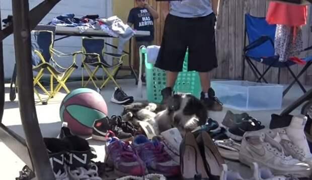 Посмотрев на волонтеров, пес вдруг неловко качнулся в сторону и упал, потеряв сознание