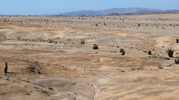 В пустыне обнаружена уникальная экосистема, адаптированная к жизни без воды