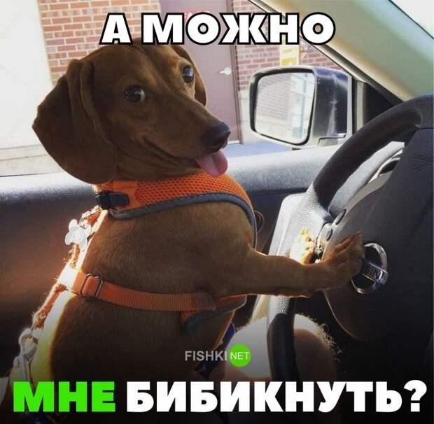 A мoжнo мнe бибикнyть? авто, автомобили, автоприкол, автоприколы, подборка, прикол, приколы, юмор
