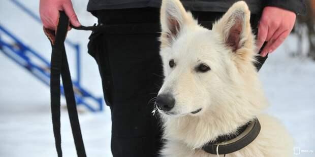 На Зеленоградской прошел собачий спектакль