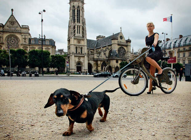 Собаки на Сене.
