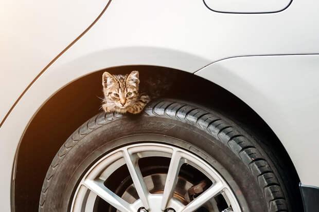 В Москве спасли котёнка из-под колёс автомобиля