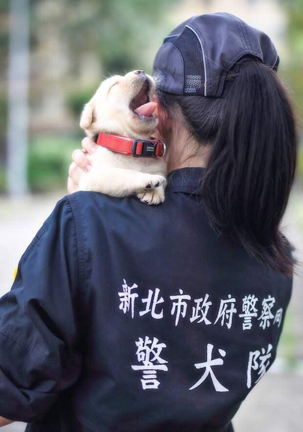 Полиция Тайваня взяла на службу самых милых четвероногих сотрудников в мире