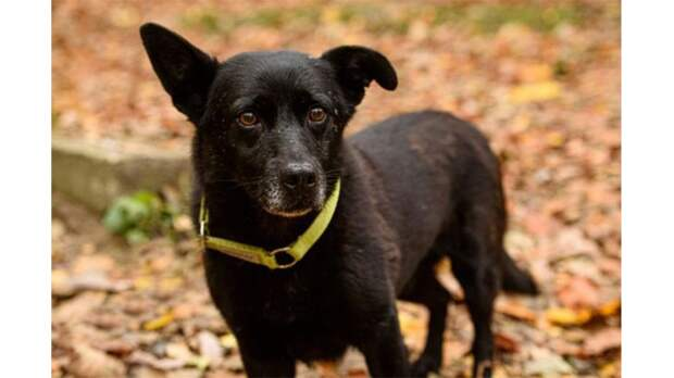 Слепая собака сбежала из дома – и вернулась к человеку, который о ней заботился