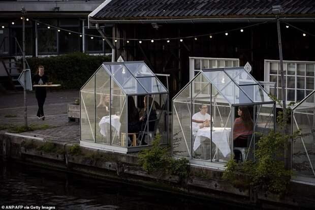 Голландский ресторан посадил посетителей поужинать в теплицах